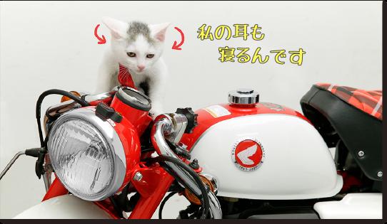 Z50 Sad Cat